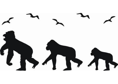 Naklejka na ścianę Małpy 1061
