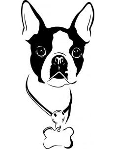 Naklejka Boston Terrier