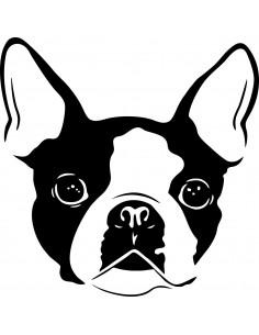 Naklejka ścienna Boston Terrier